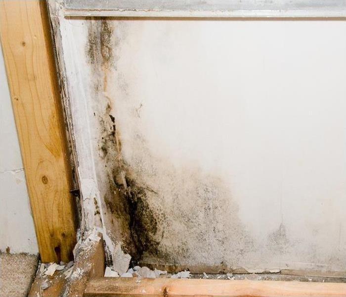 Mold Remediation Why Mold Damage Removal Is Not Possible In Winter Haven – And What To Do Instead