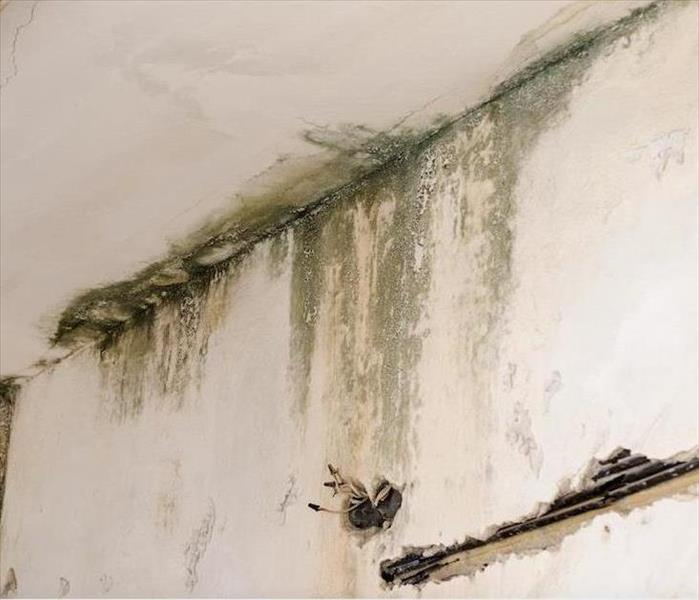 Mold Remediation Small Scale Hurricanes Can Bring Heavy Rain to Your Lakeland Home and Cause Mold Damage
